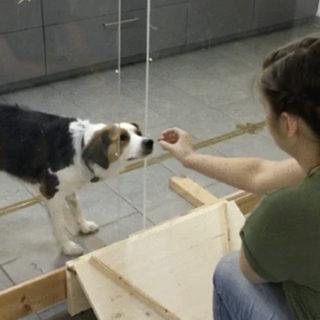 Понимающая собака разбирается в намерениях людей