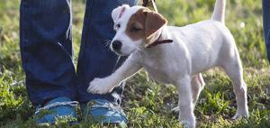 здоровье собаки: простые правила