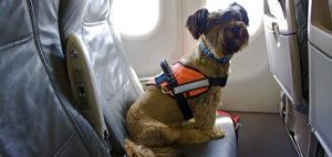животные в самолете