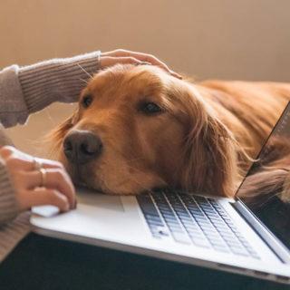 собаки понимают людей: эксперимент