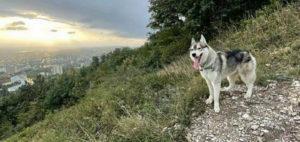 житель Кабардино-Балкарии убил собаку