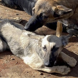 Собаки приюта Лохматая душа