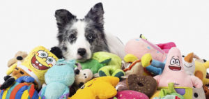 Умные собаки помнят названия игрушек