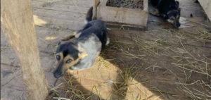 Приют для собак в Чехове