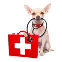 Ветеринарная интернет-аптека